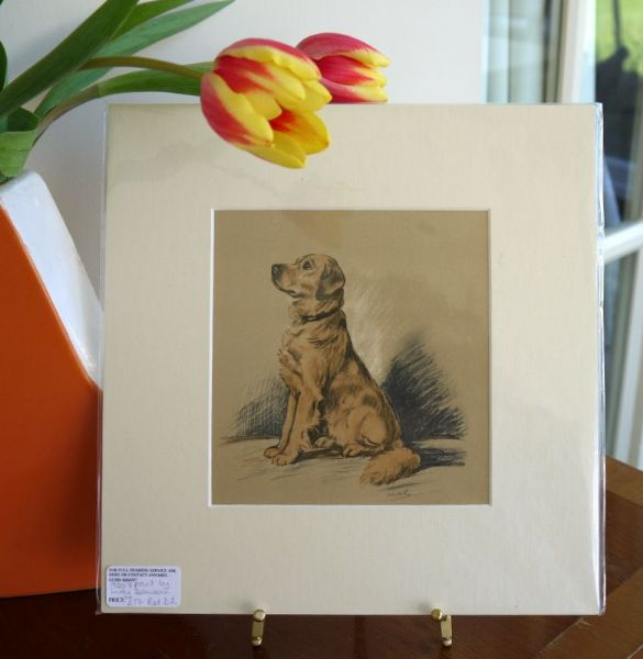 Golden Retriever - Ret D2 - 1940's print by Lucy Dawson